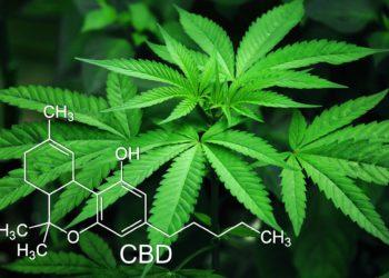 Cannabis Sativa gilt als wertvolle Nutzpflanze, ist aber drogenpolitisch höchst umstritten. (Foto: Pixabay)