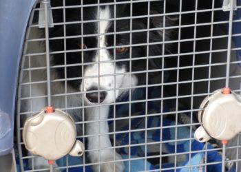 Fluggesellschaften befördern Hunde meist nur in einer Tansportbox. (Foto: Tomasz Mikolajczyk, Pixabay)